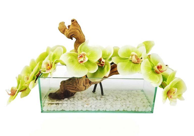 چیزی که آکورایوم شما نیاز دارد، یک گلدان آکواریومی است!